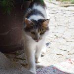 Katzen am Biohof Schafflhof im Mühlviertel, Oberösterreich