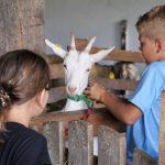 Bio- und Kinderbauernhof Schafflhof
