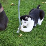Verspielte Katze Urlaub am Bauernhof Löschgruberhof, Mühlviertel