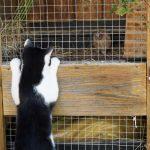 Neugierige Katze Urlaub am Bauernhof Löschgruberhof, Mühlviertel
