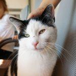 Katze Urlaub am Bauernhof Löschgruberhof, Mühlviertel
