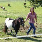 Pony Urlaub am Bauernhof Löschgruberhof Mühlviertel