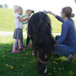 Pony striegeln Urlaub am Bauernhof Löschgruberhof, Mühlviertel