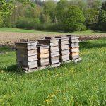 Bienenstöcke am Turmkeller Urlaub am Bauernhof