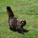 Katze Turmkeller Urlaub am Bauernhof