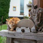 Katze am Ferienhof Breitenbaumer (c) Daniel Gollner