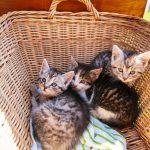 Kätzchen am Urlaub am Bauernhof am Hochhubergut
