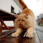 Katze auf der Gartenbank