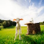 Urlaub am Bauernhof Biohof Abraham (c) Gollner